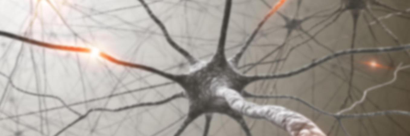 neuron1357x450-75